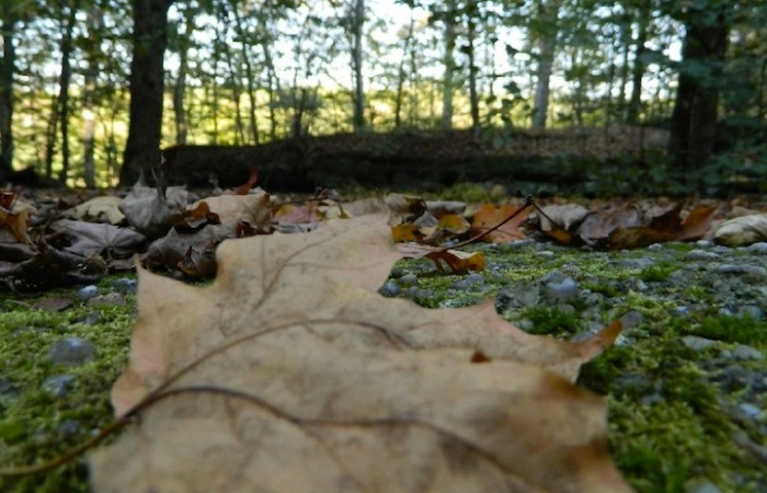 Photo Credit: Nelson-Kennedy Ledges State Park