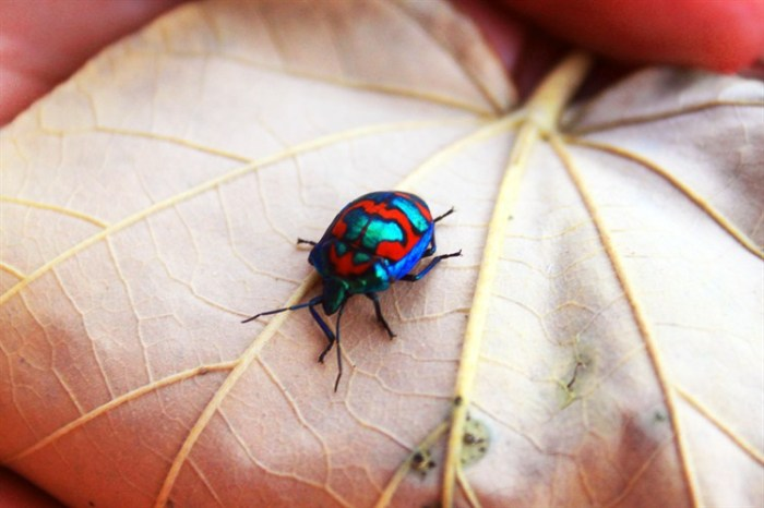 The secret beauty of bugs by Kara Zigenbine from Australia | National Geographic