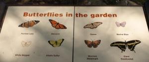 (Butterflies in the garden. Credit: Eli/The Living Desert)