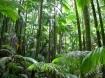 biodiversity forest